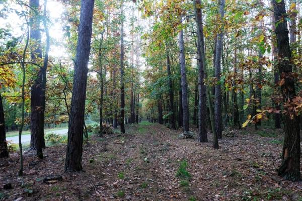 Las w Niestronnie